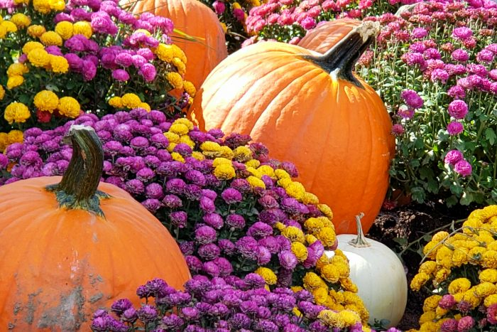 pumpkins and flowers in a colorful autumn setting