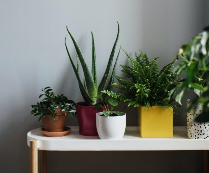potted plants sitting on a table